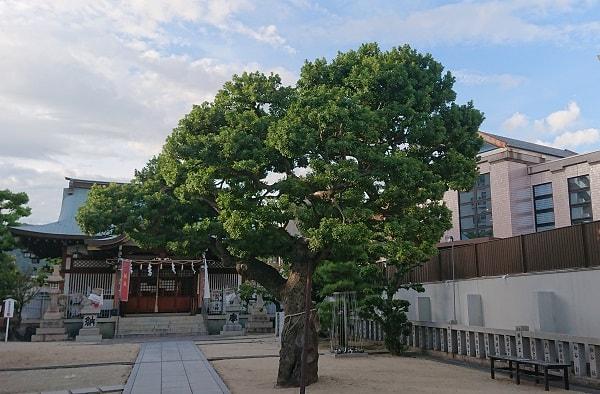 打出天神社の御神木