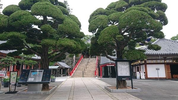 中山寺の大きな木