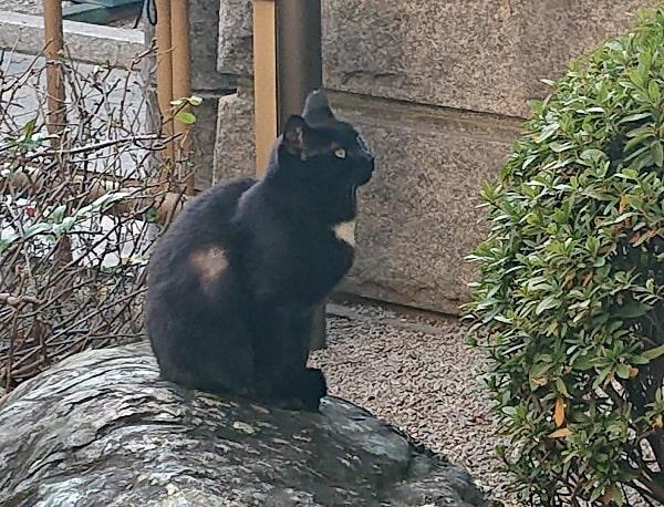 太融寺の猫