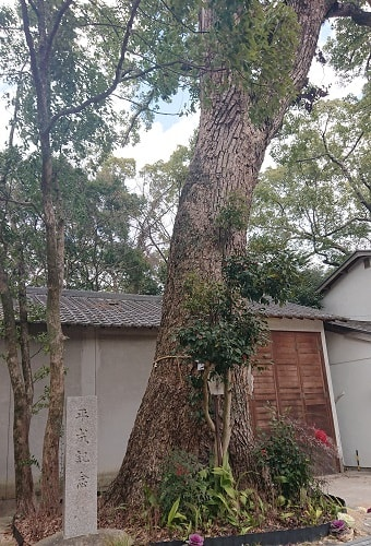 生瀬皇太神社の御神木