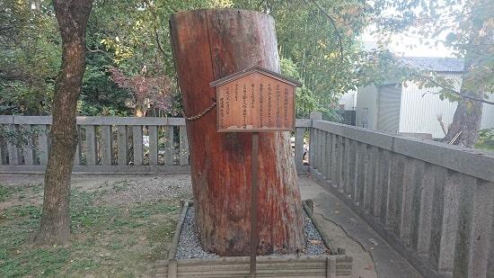 健速神社の御神木